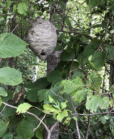 Ruche ruche dans un arbre dans le désert d & # 39 ; été Banque d'images - 83563915