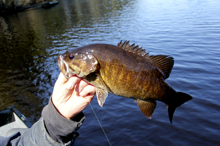 Small-Mouth Bass closeup with a lake in the background