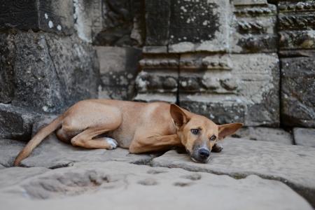morose: Morose puppy on floor