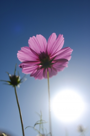 flower on the sunshine photo
