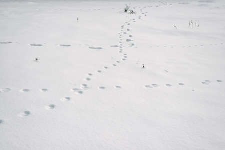 Human and animal tracks in the snow with a small amount of dry plants