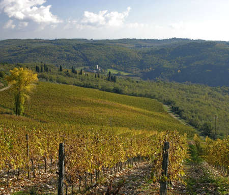 A winding road passes through a large Tuscan Vineyard photo