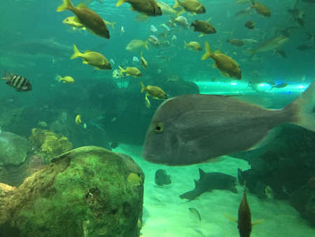 Exotic fish swimming in a tank with other aquatic animals, clear water Stock Photo