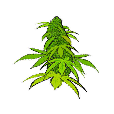 Green bright cannabis flower in a hand-drawn style isolated on a white background. A lump of cannabis for your arts