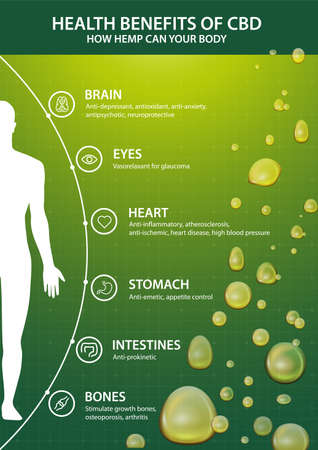 Green vertical poster with inphographic of CBD benefits for your body and silhouette of human body. Health benefits of Cannabidiol CBD from cannabis, hemp, marijuana, effect on body