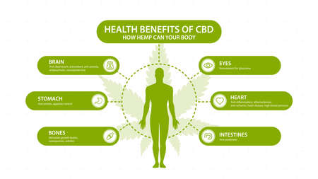 Hemp CBD benefits for your body, white poster with inphographic and silhouette of human body. Health benefits of Cannabidiol CBD from cannabis, hemp, marijuana, effect on body Ilustração