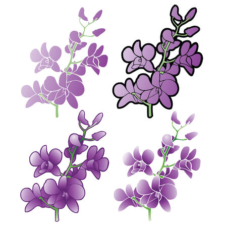 Purple Orchids, Different versions Vector