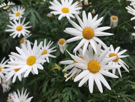 white: White and yellow flowers