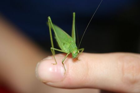 a green grasshopper on a finger photo