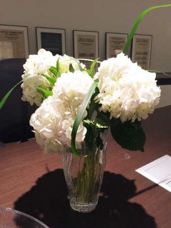 White Flowers Hydrandias Stock Photo - 34663453