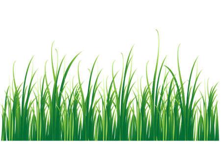 grassy field: grass background