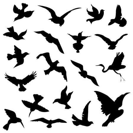 canary bird: bird silhouettes Illustration
