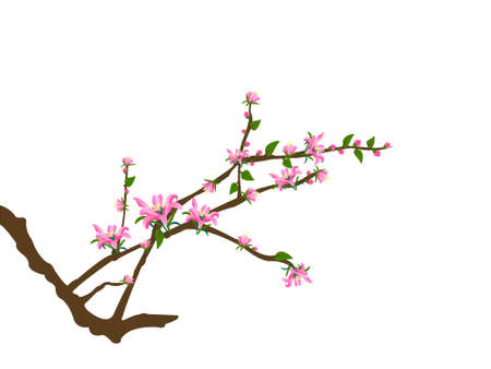 tree twigs and pink flowers Stock Vector - 8045264