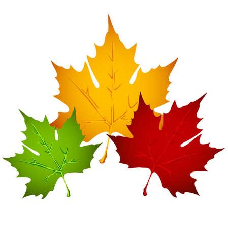 hojas de maple: Hojas de oto�ales  Vectores