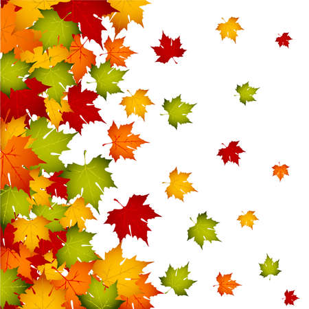 yellow leaves: Autumn leaves