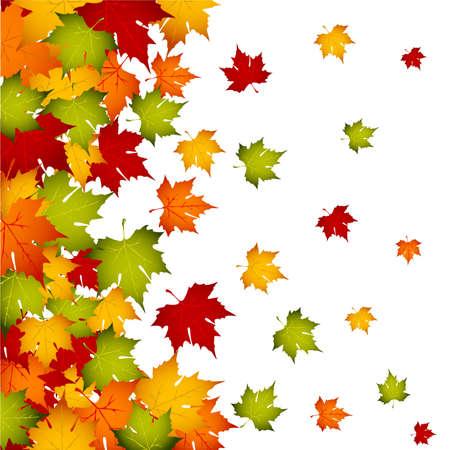 autumn leaf frame: Hojas de oto�ales  Vectores