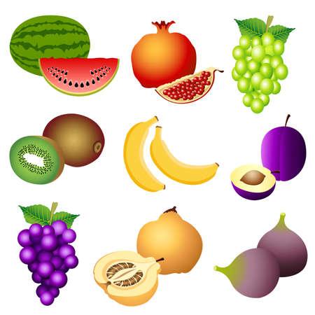 fig leaf: fruits Illustration