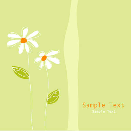 white daisies: floral greeting card