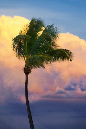 Miami Beach, Florida, United States