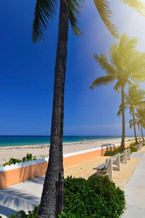 palm trees at a tropical beach in the Palm Beach