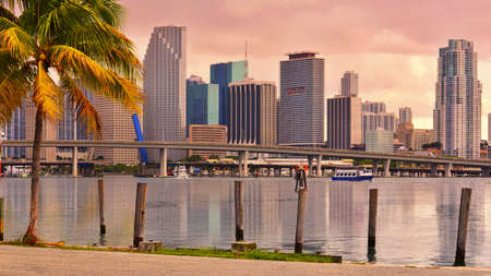 Downtown Miami Skyline and Brickell Financial District with two palm trees in a front at beautiful golden sunset  Miami, Florida, United States