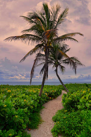 Tropical empty beach sunset with palm trees and path to the beach, South Beach Miami, Florida, United States Standard-Bild
