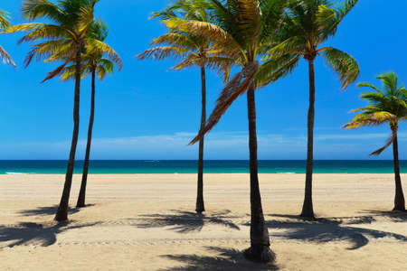 Tropical coast with ocean and palm trees, Sunrise Beach, Fort Lauderdale, Florida, United States   Standard-Bild