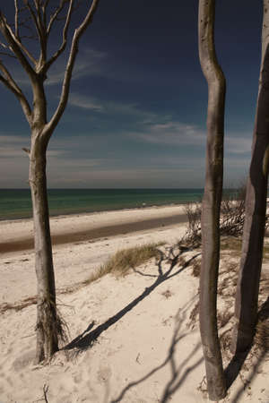 West beach on the Darss, national park pre-Pomeranian Boddenlandschaft, Germany  photo