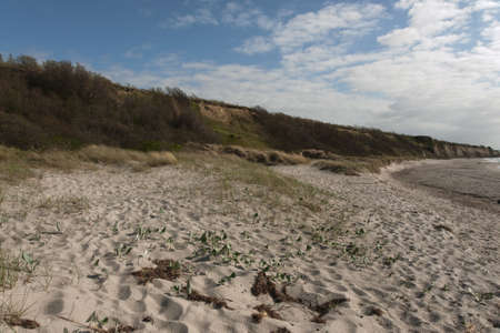 Steep coast at Ahrenshoop, fish country {land}, {land} Germany  photo