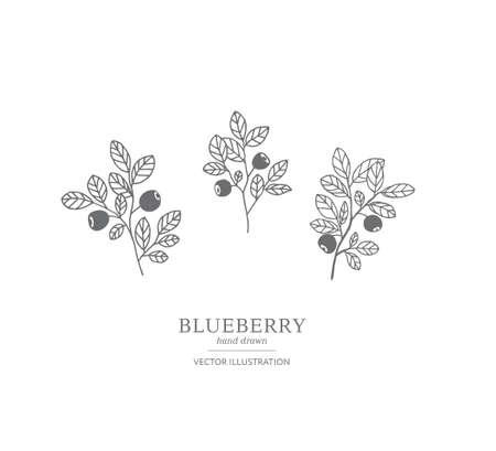 Branches de myrtille dessinés à la main isolés sur fond blanc. Collection d'illustrations vectorielles de botanique. EPS 10