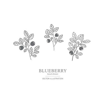 Hand drawn blueberry branches isolated on a white background. Collection of botany vector illustrations. EPS 10