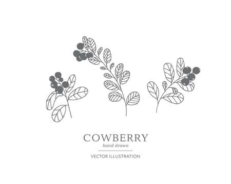 Hand drawn cowberry branches isolated on a white background. Collection of botany vector illustrations. EPS 10 Vetores
