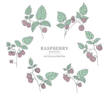 Hand drawn raspberry branches isolated on white background. Collection of botany vector illustrations. EPS 10 Иллюстрация