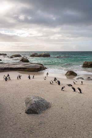 Penguins at Boulders Beach, South Africa 版權商用圖片