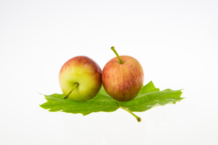 two apples and a leaf photo