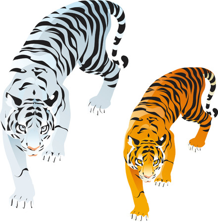 Tigers Stock Vector - 5423314