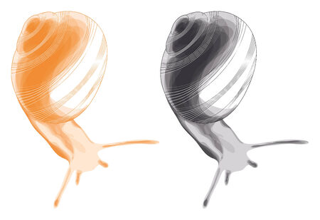 nacktschnecke: Slug. Vektor- und Grafik Illustration, isolierte Objekte. Illustration