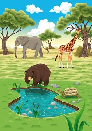 oso caricatura: Animales en la ilustración de carácter realista. Vectores