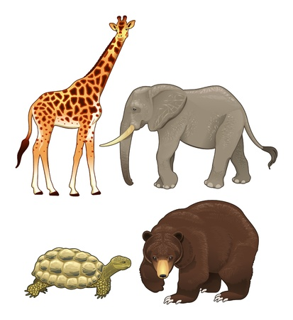 Wild animals. Vector realistic isolated characters.