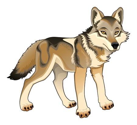 loup garou: Loup Illustration