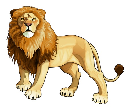 cartoon king: Lion king. Vector isolated animal.