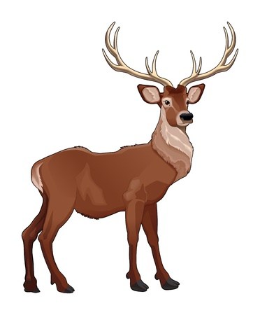 Elegant deer. Vector isolated animal.