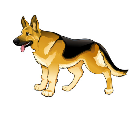 German Shepherd. Vector isolated dog. Vector