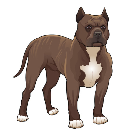 Pitbull. Vector isolated dog.