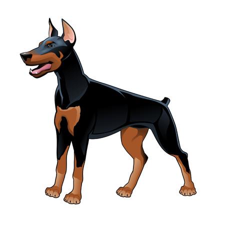 Dobermann Pinscher. Vector isolated dog. Vector Illustration