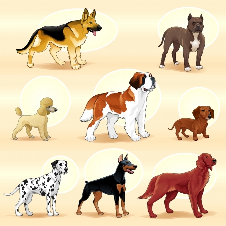 dalmatian puppy: Groups of dog. Vector illustration Illustration