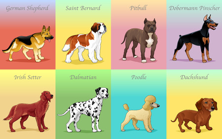 Groups of dog. Vector illustration Vector