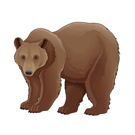 grizzly: Niedźwiedź brunatny. Vector pojedyncze zwierzę.