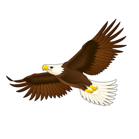 rapacious: American eagle. Vector isolated animal.
