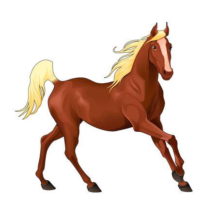 Elegant horse. Isolated vector animal. Vector